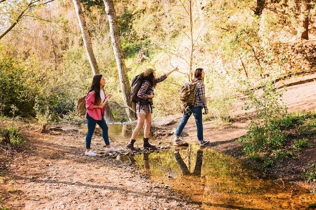 Amici che viaggiano nella foresta