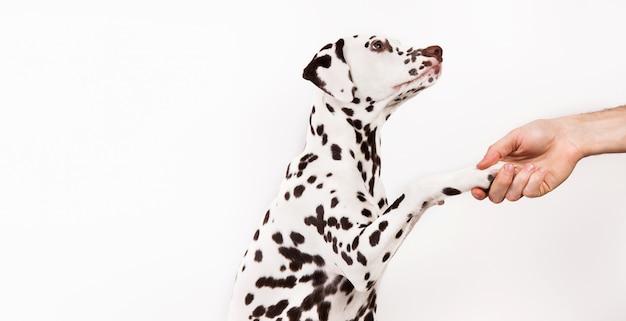 Amicizia e associazione tra uomo e cane isolato su bianco
