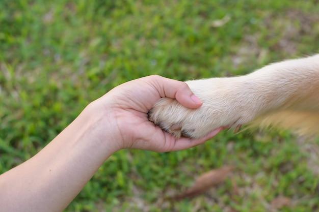 Amicizia tra uomo e cane