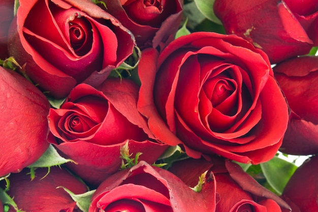 Amore fiore texture fiore bello