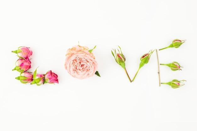 Amore testo fatto con rosa rosa e germogli su sfondo bianco