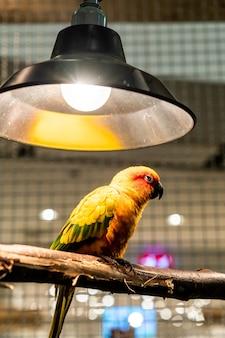 Amore uccello nel caso