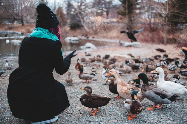 Anatre d'alimentazione della donna in parco