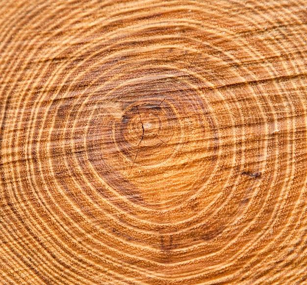 Anelli del tronco di albero, fondo di struttura, vista superiore