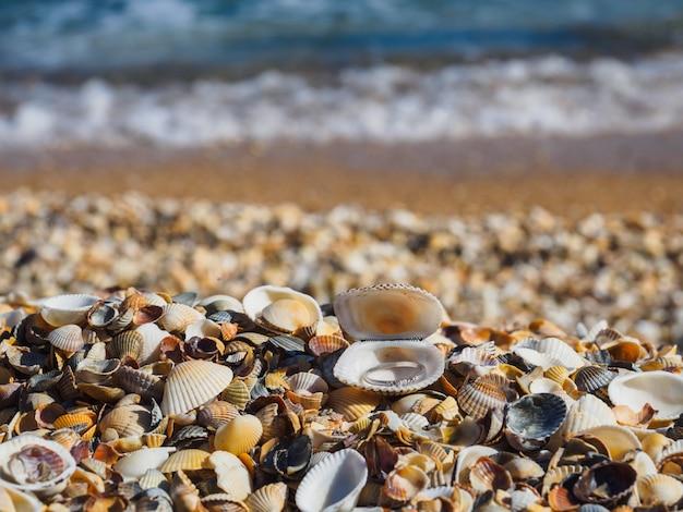 Anello in una conchiglia sul mare. un'offerta di matrimonio