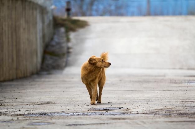 Animale domestico cane giallo con coda gonfia all'aperto