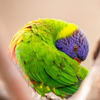 Animale pappagallo e macaw dell'uccello