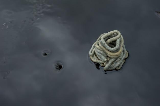Animali marini bloccati e morti in petrolio greggio