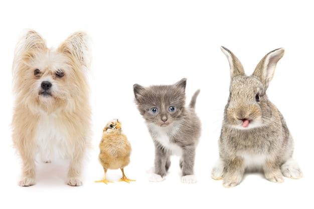 Animali su uno sfondo bianco