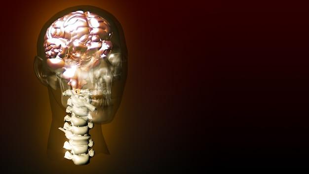 Animazione altamente dettagliata di un cervello umano
