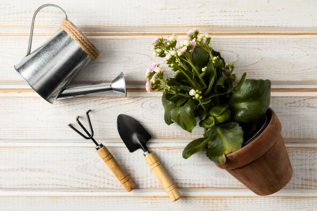 Annaffiatoio e vaso di fiori