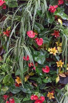 Anthurium e altri fiori colorati su uno sfondo di lussureggianti verdi tropicali