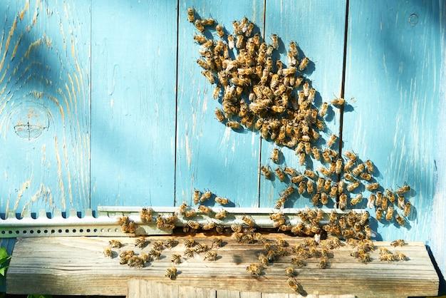 Api del miele che lavorano al concetto dell'alveare della casa dell'ape del copyspace dell'apiario.
