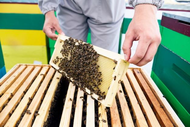 Apicoltore che controlla le api