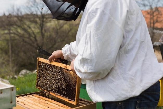 Apicoltore che estrae miele
