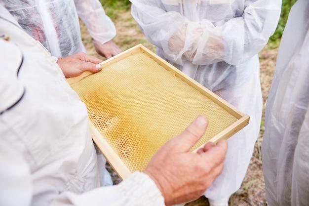 Apicoltore che raccoglie miele e cera