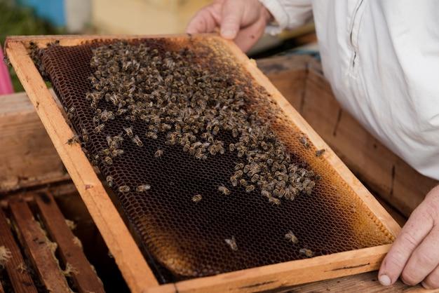 Apicoltore che tiene un nido d'ape con api e miele all'alveare