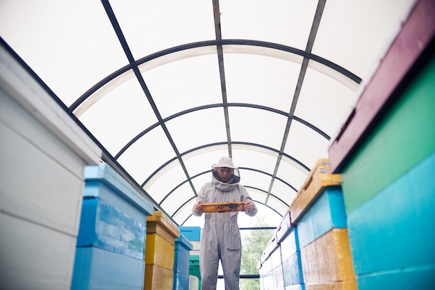 Apicoltore in apiario moderno