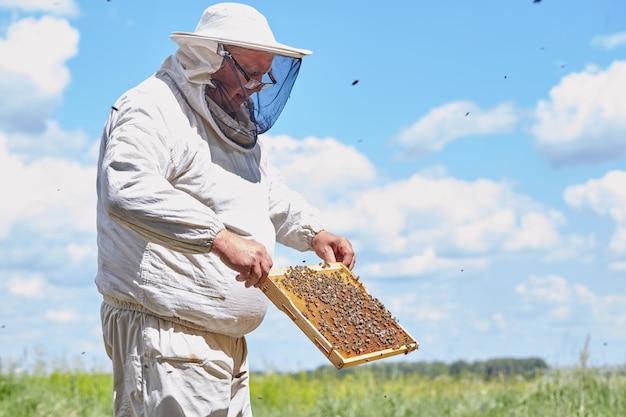 Apicoltore senior che raccoglie miele