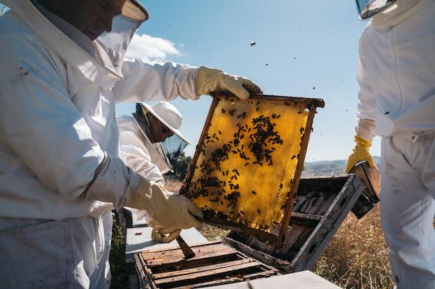 Apicoltori che lavorano per raccogliere il miele. concetto di apicoltura biologica.