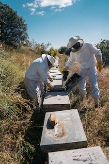 Apicoltori che lavorano per raccogliere il miele