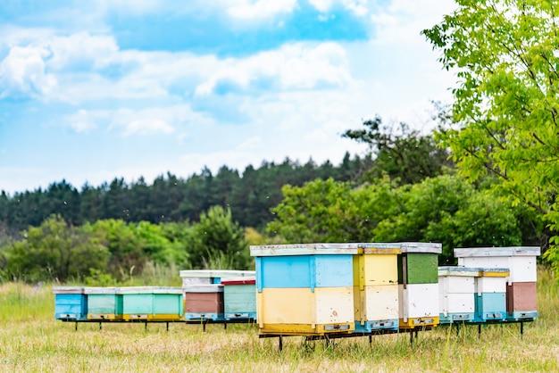 Apicoltura. le api del miele sciamano e volano intorno al loro alveare. alveari in un apiario.
