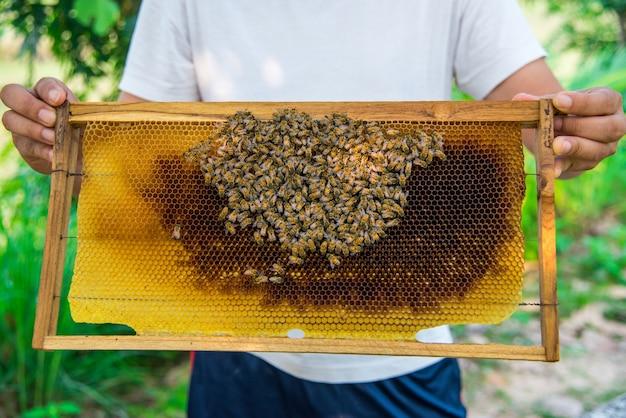 Apicoltura per mantenere il miele