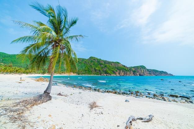 Appartato spiaggia tropicale turchese trasparente acqua palme, bai om baia non sviluppata quy nhon vietnam costa centrale destinazione di viaggio, spiaggia di sabbia bianca chiaro cielo blu