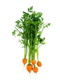 Appena raccolte intorno alle carote romeo, isolate su sfondo bianco.