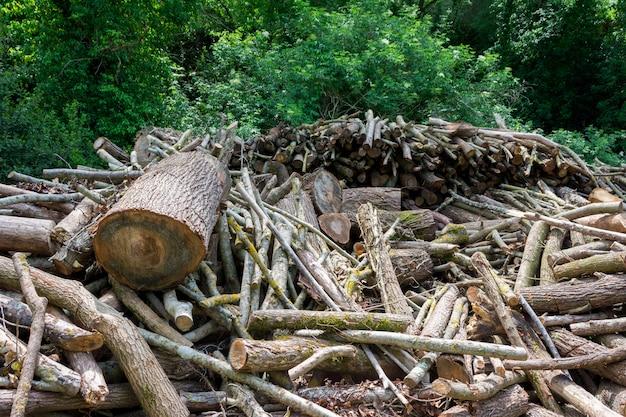 Appena tagliato il legno ai margini di una foresta