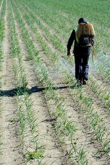 Applicazione chimica umana, campi di cipolle