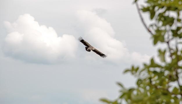 Aquila contro le nuvole con albero soft focus