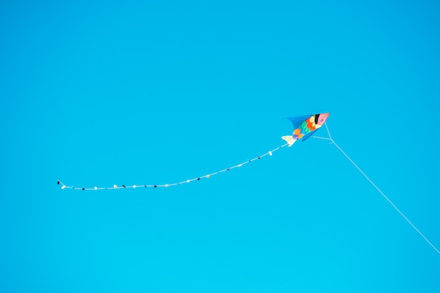 Aquilone sul cielo blu