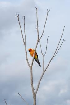 Ara dell'africa sull'albero