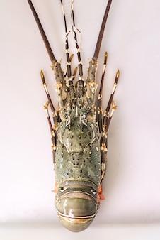 Aragosta fresca sul vassoio bianco