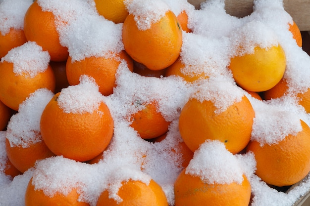 Arancia (agrumi) sotto la neve