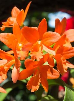 Arancio con fiori di orchidea rossi