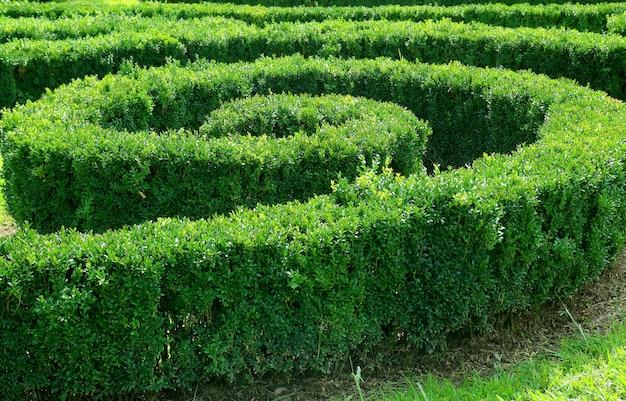Arbusti tagliati a forma di spirale ornamentale nel giardino