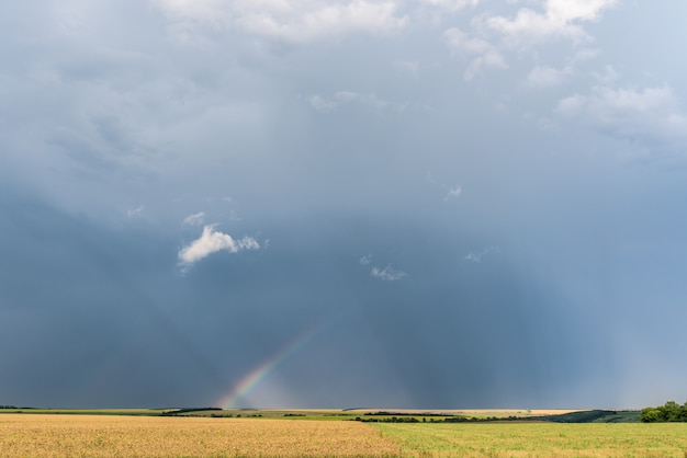 Arcobaleno sopra i campi dopo una pioggia in estate, un campo di grano, il cielo scuro con nuvole