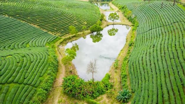 Area agricola vista aerea
