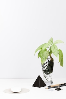 Area di lavoro contemporanea con pianta in vaso di vetro sulla scrivania