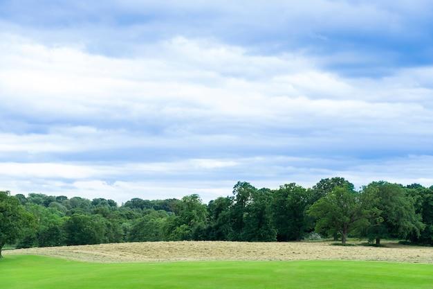 Aria fresca e bellissimo paesaggio naturale del prato con in primavera o in estate. bello lanscape del campo di erba con gli alberi forestali e il parco pubblico ambientale con cielo blu.