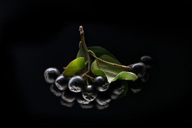 Aronia nera, isolata su sfondo nero.