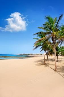 Arrecife lanzarote playa reducto spiaggia di palme