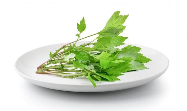 Artemisia in zolla isolata