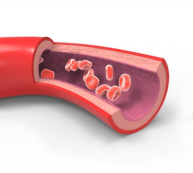 Arteria coronaria normale
