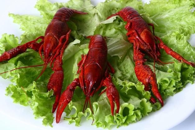 Artiglio rosso con insalata verde