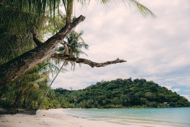 Asciuga albero sulla spiaggia con il cielo.