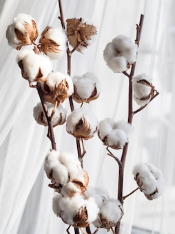 Assortimento con fiori di cotone e tenda bianca