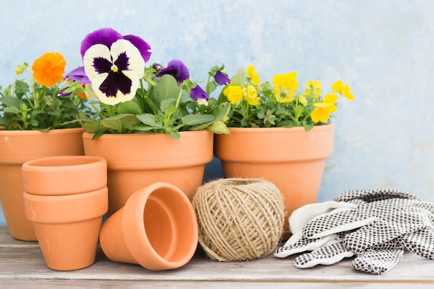 Assortimento con fiori e attrezzi da giardinaggio